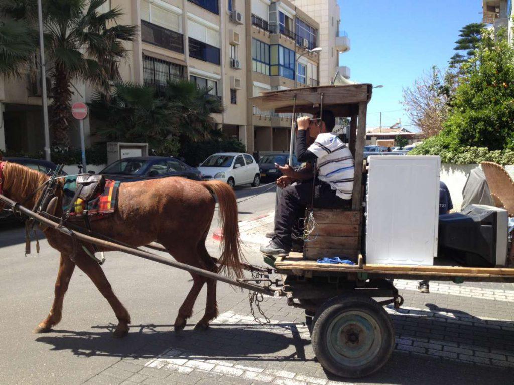 ואיפה עוד נראה סוסים שמדברים עברית?