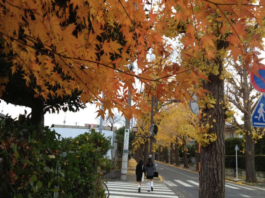 סתיו בשכונה שלי בטוקיו