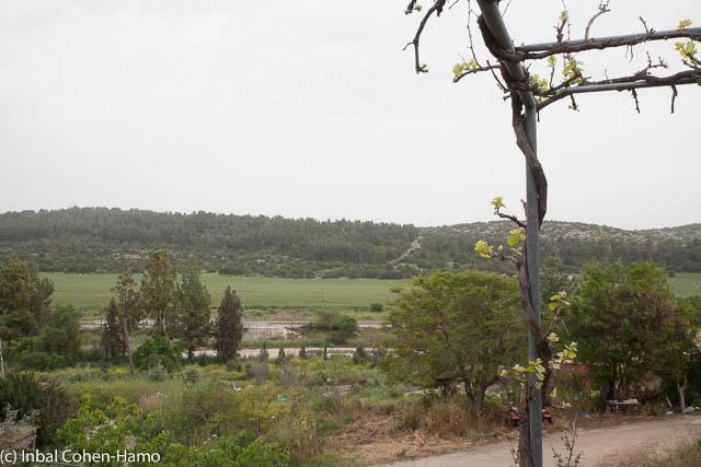 נוף ממרפסת הסטודיו בורטיגו. צילום: ענבל כהן חמו