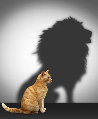 אריה שואג או חתול? (צילום: שאטרסטוק)