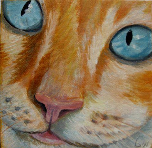 חתול כתום עינים תכלת