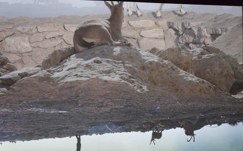 הינדה וייס - אחרי היעל הנובי, סטיל מתוך וידאו