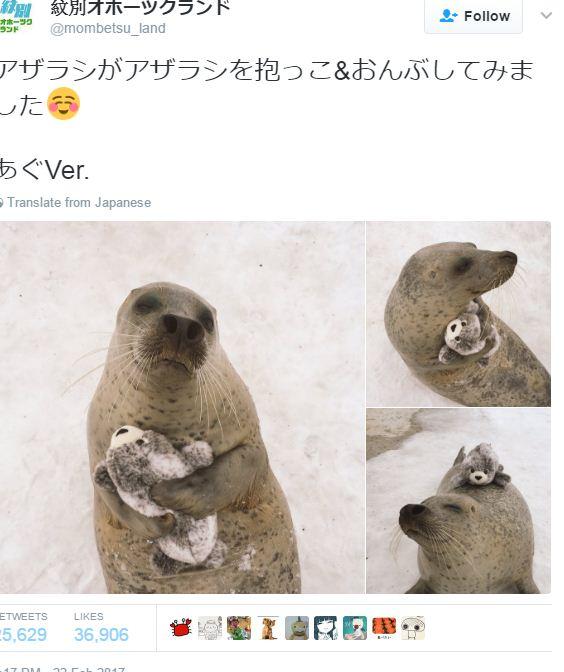 כלב ים ממיס