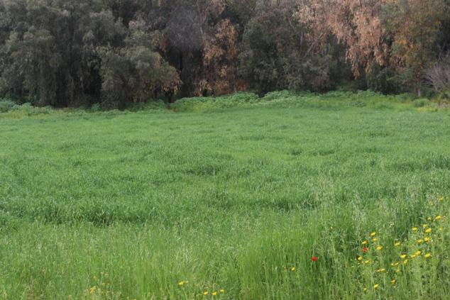 שדה ירוק מסגרת סביונים
