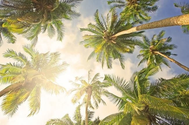 מפצחות את סוד הקוקוס (צילום: Shutterstock)