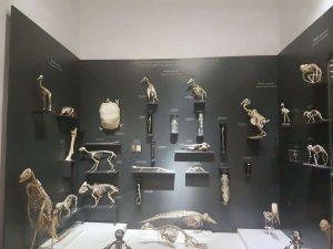 מוזיאון הטע
