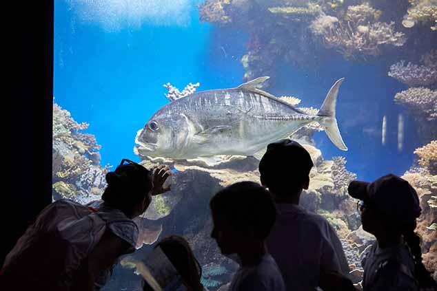 להתארח בביתם של היצורים הימיים. המצפה התת-ימי באילת