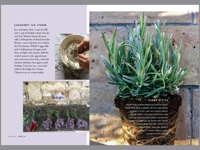 orto lavender
