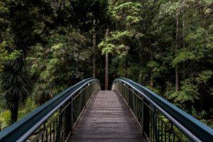 גשר לעתיד