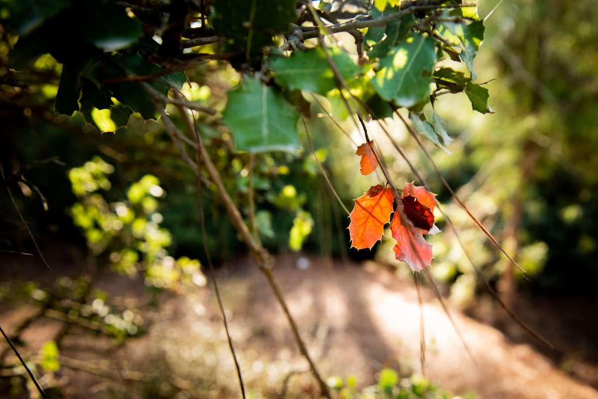 יער עפר. צילום: אלונה קרני גלמן