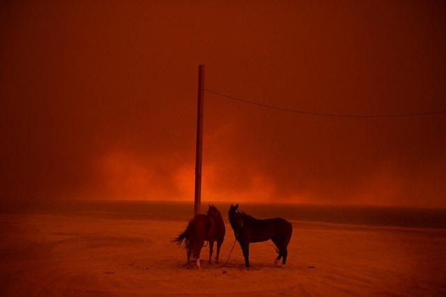 וואלי סקליג', סוסים בקליפורניה