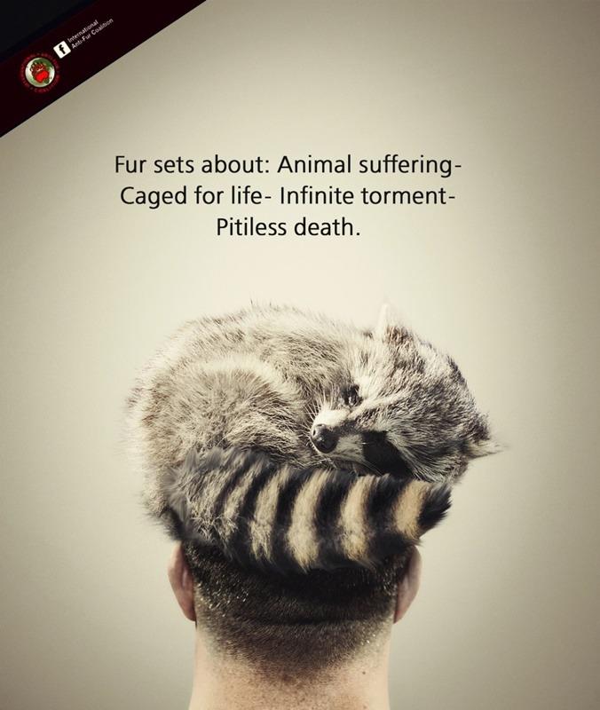 פריט הפרווה הוא תוצאה של מוות בייסורים של חיה אומללה.