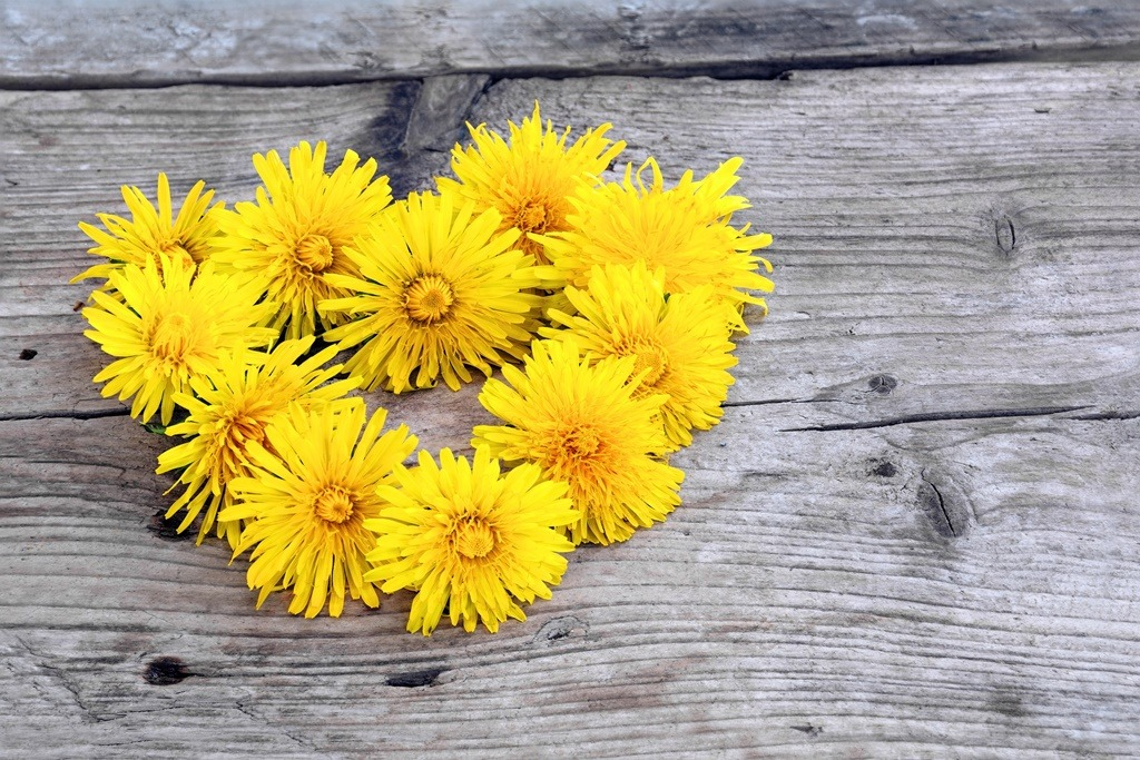 wreath in heart shape made from dandelions on  weathered wood