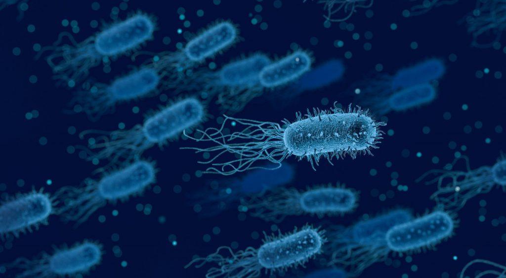 בקטריה - שולטת בכדור הארץ (pixabay)