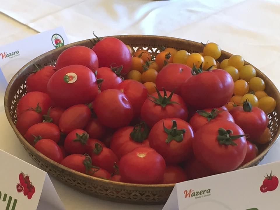 העגבניות