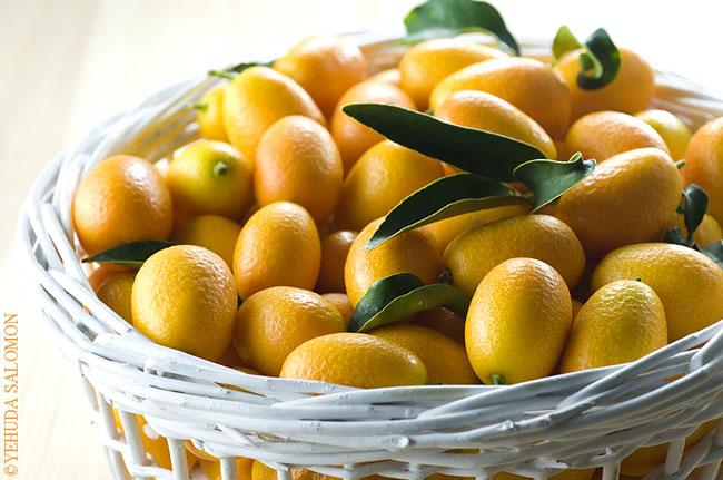 תפוזונים סיניים. צילום: יהודה סלומון
