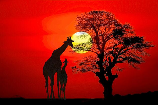 אפריקה, חלום שמדגדג (צילום: שאטרסטוק)