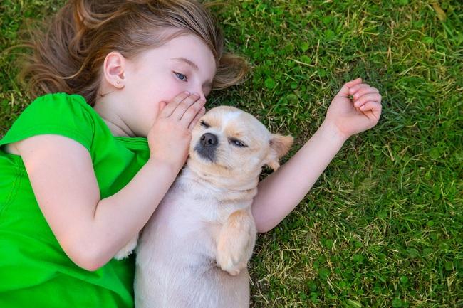 הכלב זקוק לחינוך גבולות ברורים ושגרת יום (צילום: Shutterstock)