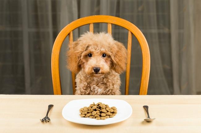 הדבר הראשון, ואולי החשוב ביותר, הוא דווקא מה לא נותנים לכלב לאכול (צילום: Shutterstock)