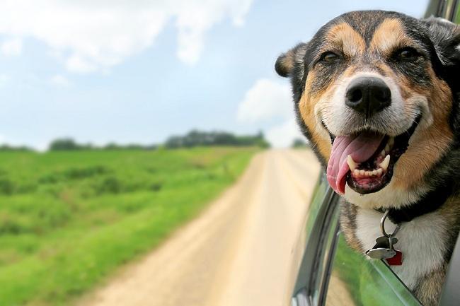 הכינו את כלבכם לקיץ: 5 כללי זהב לכלב מטופח ומאושר (צילום: Shutterstock)