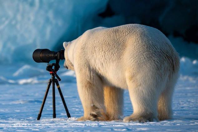 דובי קוטב צילןם רועי גליץ