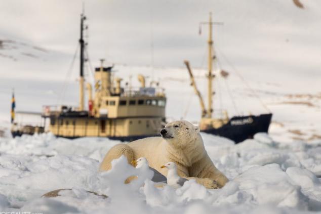 דובי קוטב צילום רועי גליץ