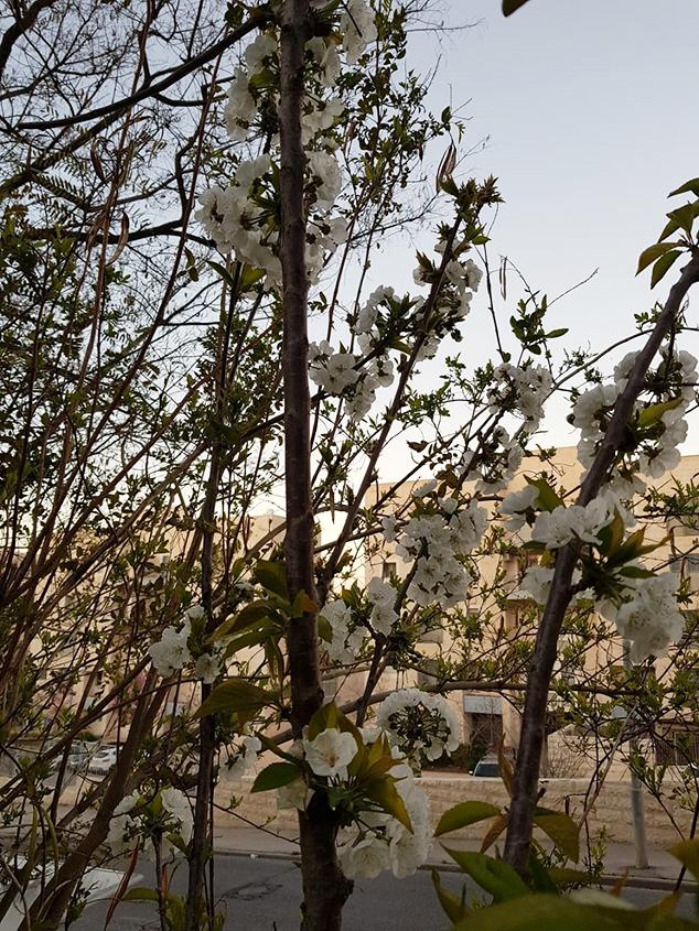 בְּרִיוֹת טוֹבוֹת וְאִילָנוֹת טוֹבוֹת, לֵהָנוֹת בָּהֶם בְּנֵי אָדָם (צילום: יערה שילה)
