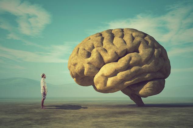 המוח הוא מרכז החיים שלנו (shutterstock -  Orla)