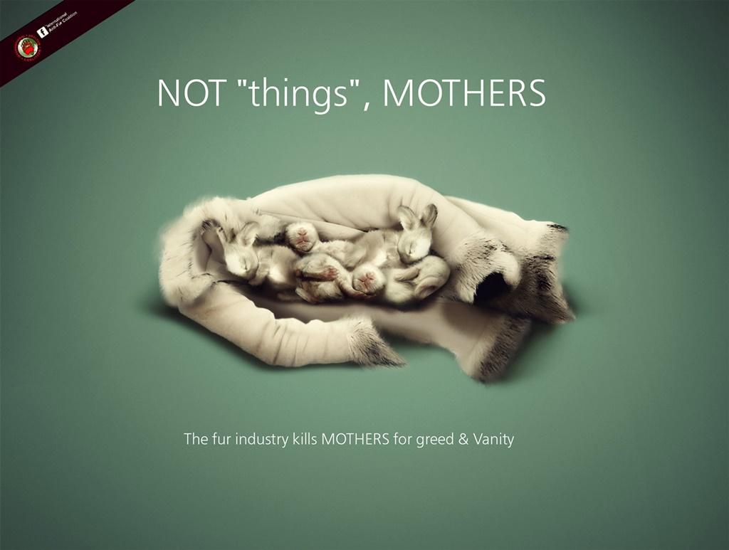 תעשיית הפרוות הורגת אמהות... כרזה נגד שימוש בפרוות של אחת האגודות העולמיות