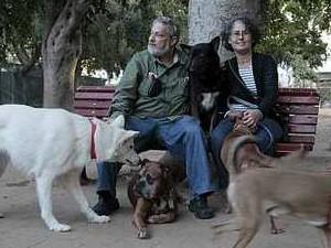 כלבים בתל אביב