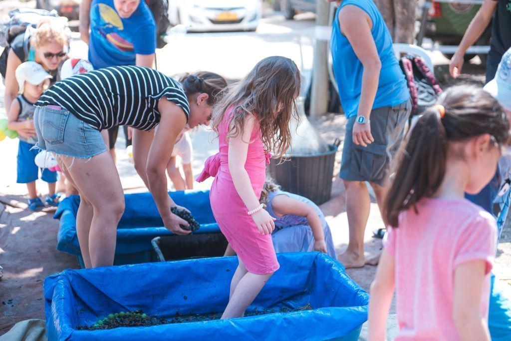 סדנת דריכת ענבים הפנינג משפחות בפסטיבל חויה בכרם ה3 צילום רונן חורש