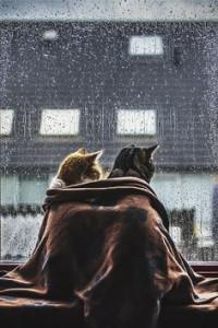גשם 2